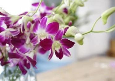 云南昆明bob官网批发紫色洋兰组合鲜切花基地直发一件代发招代理
