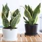 大型植物,定做室内开花植物 办公室绿植 客厅花卉 大型植物租摆